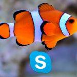 Как переводить иностранный текст в Skype?